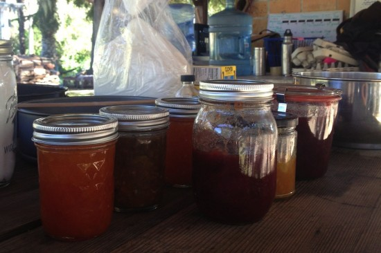 apricot, pluot, kumquat and strawberry jams for the tarts