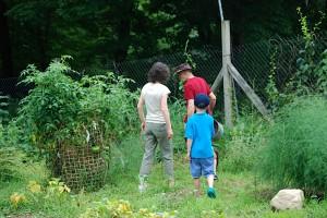 heading into my Dad's garden
